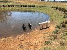 Harvey is still here. Dam is getting low!