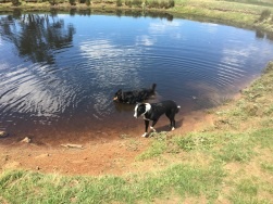 Daily dam swims are on the agenda